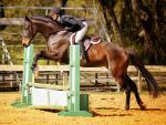 Orlando Horse Sales