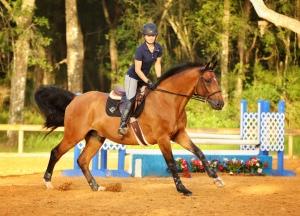 Orlando Horse Sale