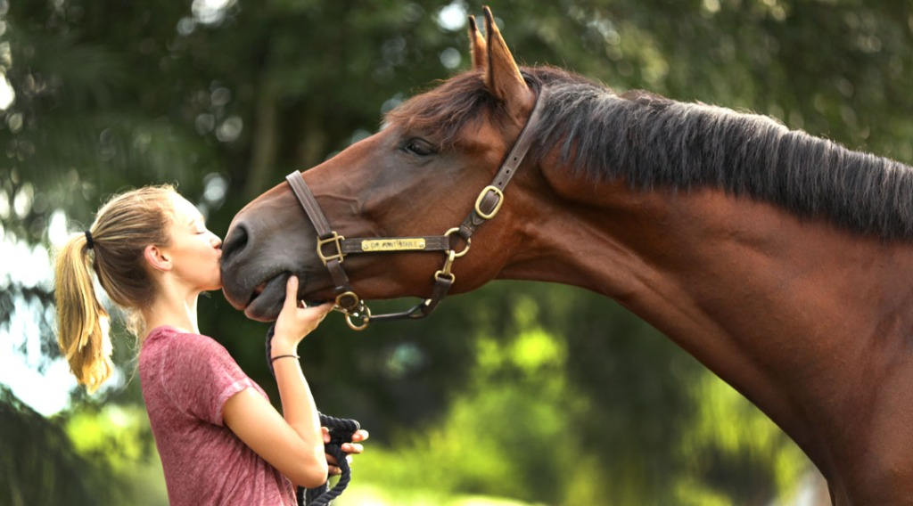 Orlando Horse Boarding